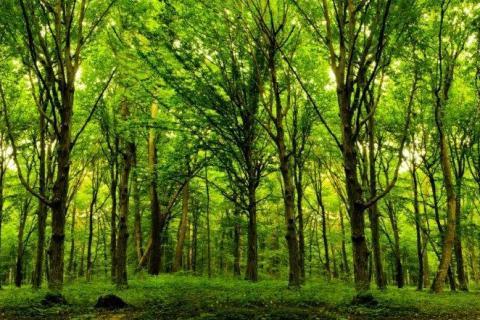 smart-art-trees-misty-forest-tree-trunks-sunlight-autum-winter-spring-summer-55