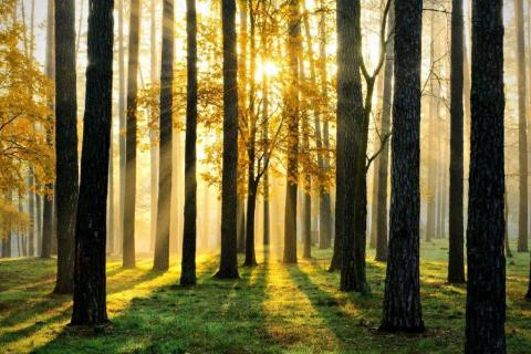 smart-art-trees-misty-forest-tree-trunks-sunlight-autum-winter-spring-summer-56