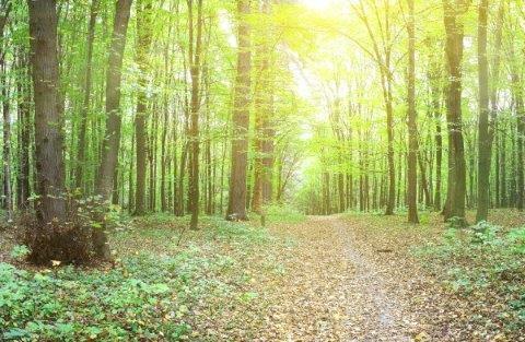 smart-art-trees-misty-forest-tree-trunks-sunlight-autum-winter-spring-summer-57
