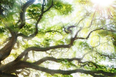 smart-art-trees-misty-forest-tree-trunks-sunlight-autum-winter-spring-summer-58