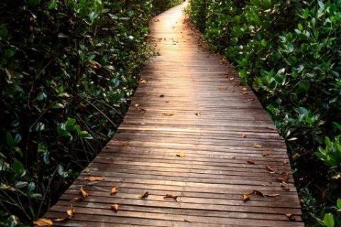 smart-art-trees-misty-forest-tree-trunks-sunlight-autum-winter-spring-summer-59