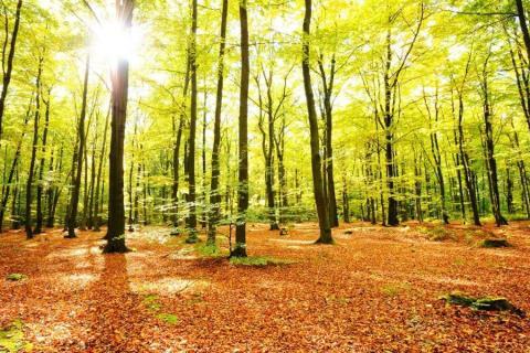 smart-art-trees-misty-forest-tree-trunks-sunlight-autum-winter-spring-summer-60