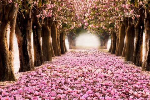 smart-art-trees-misty-forest-tree-trunks-sunlight-autum-winter-spring-summer-61
