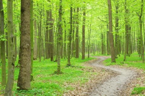 smart-art-trees-misty-forest-tree-trunks-sunlight-autum-winter-spring-summer-63
