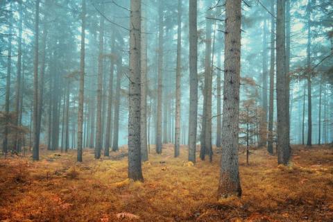 smart-art-trees-misty-forest-tree-trunks-sunlight-autum-winter-spring-summer-64
