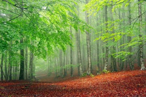 smart-art-trees-misty-forest-tree-trunks-sunlight-autum-winter-spring-summer-65