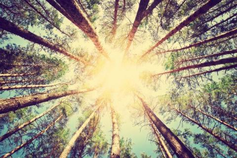 smart-art-trees-misty-forest-tree-trunks-sunlight-autum-winter-spring-summer-66