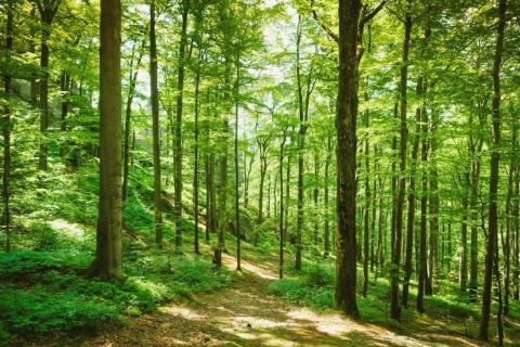 smart-art-trees-misty-forest-tree-trunks-sunlight-autum-winter-spring-summer-67