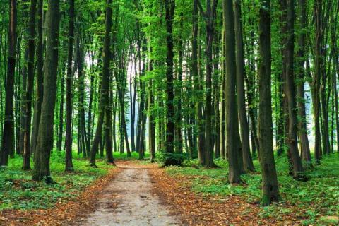 smart-art-trees-misty-forest-tree-trunks-sunlight-autum-winter-spring-summer-68