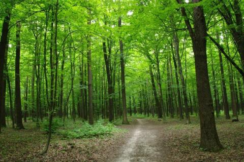 smart-art-trees-misty-forest-tree-trunks-sunlight-autum-winter-spring-summer-69