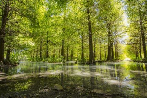 smart-art-trees-misty-forest-tree-trunks-sunlight-autum-winter-spring-summer-70