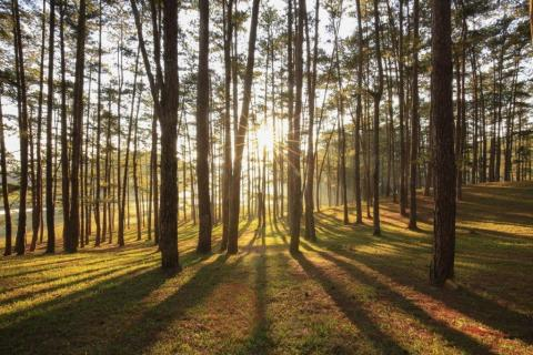 smart-art-trees-misty-forest-tree-trunks-sunlight-autum-winter-spring-summer-72