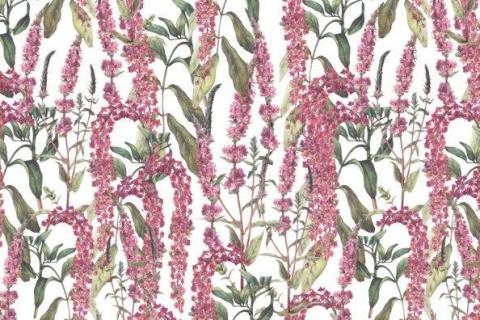 pink-and-purple-orchids-2