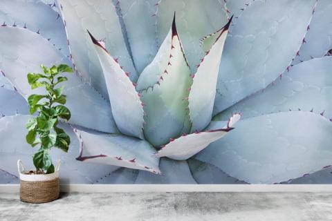 smart-art-oversized-macro-cactus-flower-for-wallpaper-south-africa