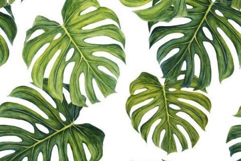 parot-banana-leaves-leopard-flamingo-30