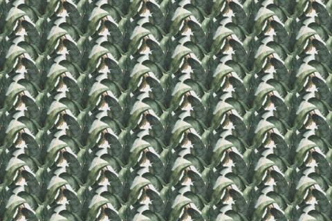 parot-banana-leaves-leopard-flamingo-87