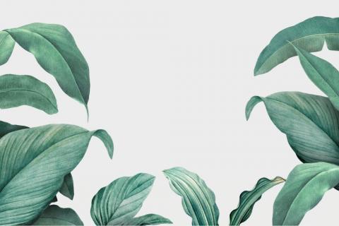 parot-banana-leaves-leopard-flamingo-88