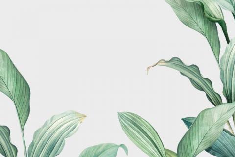 parot-banana-leaves-leopard-flamingo-89