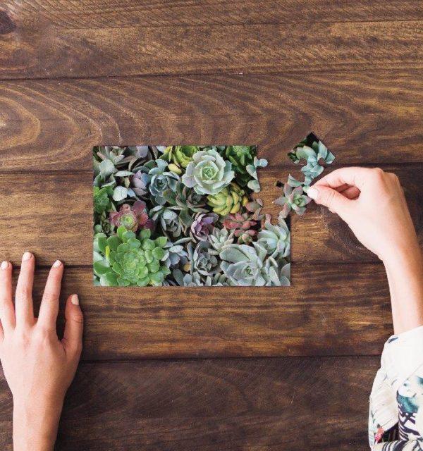 Smart Art Bespoke Printed Puzzle Succulents